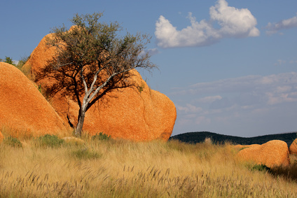 Tree and rock, Namibia