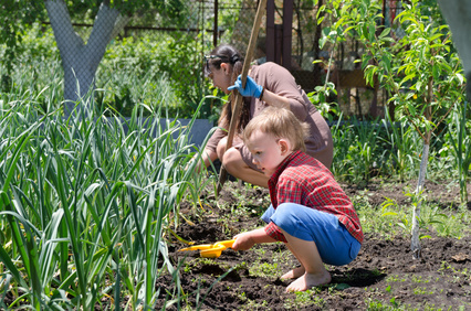 Cute little boy weeding the vegetable garden