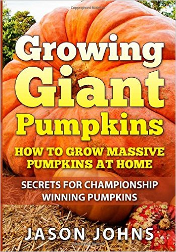 growing giant pumpkin