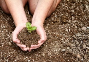Close-up of child holding dirt with plant