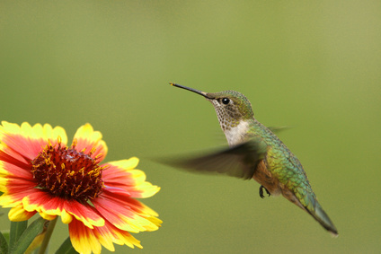 Hummingbirds Only Like Red Right? Wrong!