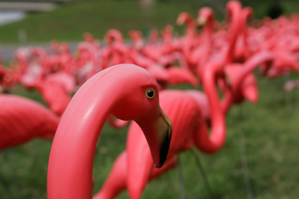 Flock of plastic pink flamingos